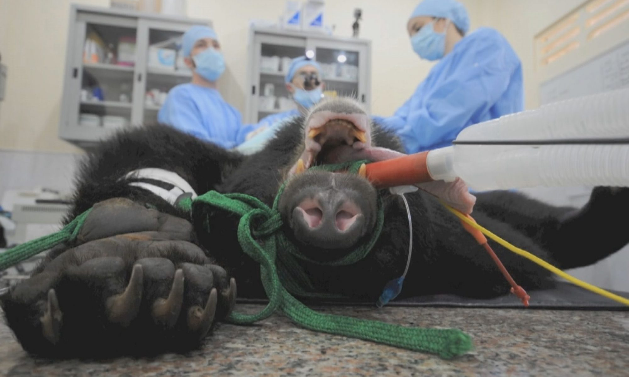 Wildlife Surgery International